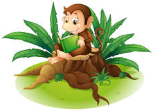 A monkey reading above a stump Royalty Free Stock Image