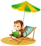 A monkey reading a book at the beach Stock Photos