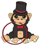 Monkey ready to circus show Royalty Free Stock Image