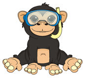 Monkey ready to diving Royalty Free Stock Photography
