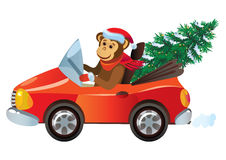 Monkey in the red car with a New Year tree Royalty Free Stock Photos