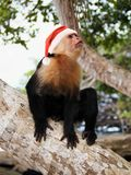 Monkey in red Santa Claus hat Royalty Free Stock Photos
