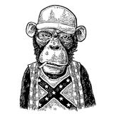 Monkey redneck in trucker cap, t-shirt with flag Confederate. Stock Photo