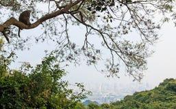 Monkey regarder la ville de Kaohsiung de Shoushan, montagne de singe - Taïwan Image libre de droits