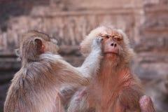 Monkey relationship Stock Photo