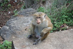 Monkey relaxing in natural environment Stock Photos