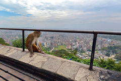 A monkey relaxing at Swayambhunath temple Royalty Free Stock Image
