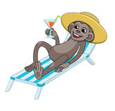 Monkey resting in a deck chair and drinking beverage Stock Images