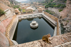 Monkey rhesus macaque sitting on the wall with water tank Royalty Free Stock Photography