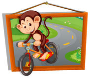 Monkey riding bicycle on the road Royalty Free Stock Photography