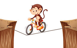 Monkey riding bike on the rope Stock Images