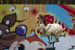 A monkey riding a goat standing on a very narrow pad Stock Photo