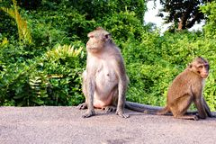 Monkey on the road Royalty Free Stock Photography