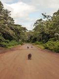 Monkey on the road Stock Images