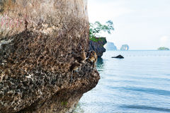 Monkey on a rock on the beach in Thailand Royalty Free Stock Photos
