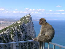 Monkey at the Rock of Gibraltar. A monkey calmly sits on a security railing at a scenic overlook for the Rock of Gibraltar, enjoying the beautiful view Royalty Free Stock Photography