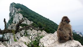 The monkey rock Gibraltar (country) Royalty Free Stock Photo