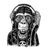 Monkey rocker in headphones and t-shirt with skull. Vintage engraving Stock Photos