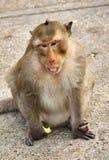 Monkey on the rocks funny close-up. Thailand Stock Image
