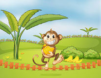 A monkey running away with bananas Stock Photos