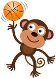 Monkey's ball Royalty Free Stock Images