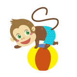 A monkey's beach activities Royalty Free Stock Image
