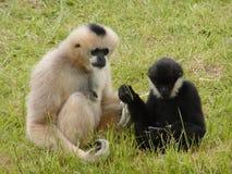Monkey's Debating. Two monkey's debating on what to eat royalty free stock photos