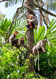 Monkey's family Stock Photo