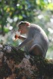 Monkey& x27;s having icecream stock images