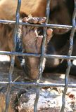 Monkey`s leg behind fender Stock Image