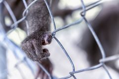 Monkey`s paw on the cage. A wild beast devoid of will. The GreenPeace concept. Monkey`s paw on the cage. A wild beast devoid of will. The GreenPeace concept Royalty Free Stock Photos