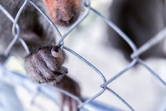 Monkey`s paw on the cage. A wild beast devoid of will. The GreenPeace concept. Monkey`s paw on the cage. A wild beast devoid of will. The GreenPeace concept Stock Photo