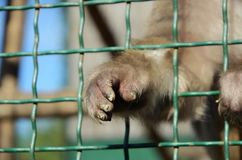 Monkey`s paw in a cage stock photography