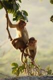 Monkey's Stock Photo