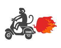 Monkey on the scooter. Vector illustration isolated on the white background Stock Photos