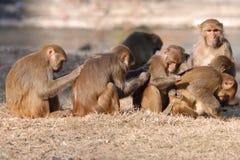Monkey Scratch Stock Photo