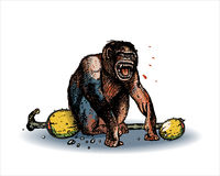 Monkey screaming. Screaming monkey isolated on light background Royalty Free Stock Photos