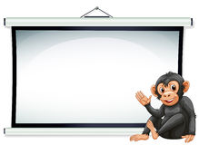 Monkey and screen Royalty Free Stock Images