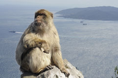 Monkey with sea background in Gibraltar royalty free stock photo