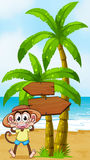 A monkey at the seashore near the wooden arrowboard Royalty Free Stock Images
