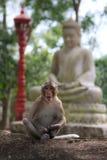 Monkey sentarse en piedra del jardín con la estatua de Buda en el fondo Foto de archivo libre de regalías