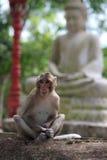 Monkey sentarse en piedra del jardín con la estatua de Buda en el fondo Imágenes de archivo libres de regalías