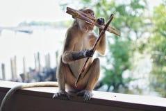 Monkey sentarse y la consumición en el de madera viejo en el fondo de la falta de definición imagen de archivo