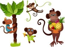 Monkey set Stock Photography