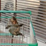 Monkey shopping Stock Photo