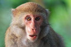 Monkey in Shoushan, Monkey Mountain in Kaohsiung city, Taiwan Stock Photo