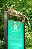 Monkey on Signboard Royalty Free Stock Images