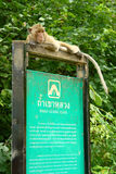 Monkey on Signboard Royalty Free Stock Photo