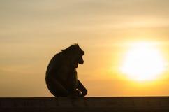 Monkey in silhouette Stock Photos