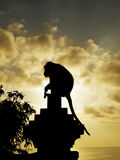 Monkey silhouette Stock Image